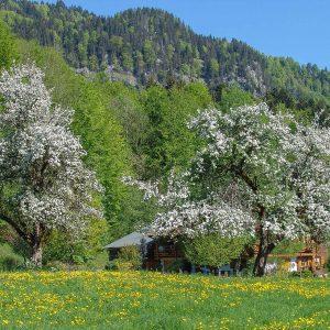 Obstbäume in Oberstdorf