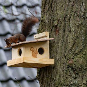 Eichhörnchen auf dem Kobel