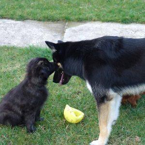 Luca und Chato