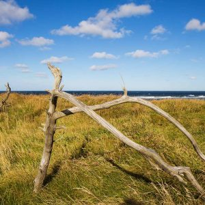 strandholz