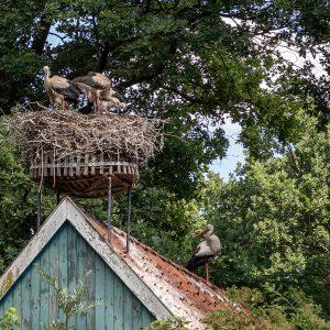 storchennest_im_tierpark_nordhorn